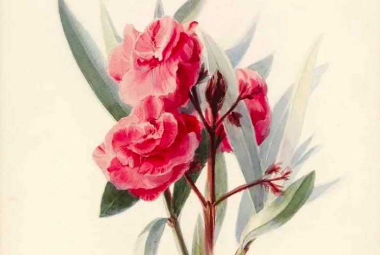 workshop online pintura